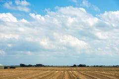Farm field in holland Stock Image