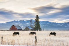 Farm field and horses with home and barn Stock Photography