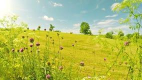 Farm field in Kentucky stock footage