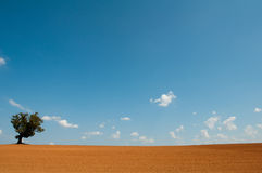 Farm field with lone tree Stock Photography