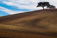 Farm Field. Lonely tree on farm field. Alentejo, Portugal royalty free stock images