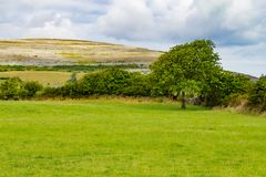 Farm field with Mountain and vegetation in Ballyvaughan. Ireland royalty free stock images