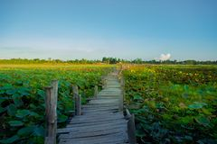 Farm, Field, Organic Farm, Plant, Rice - Cereal Plant royalty free stock photo