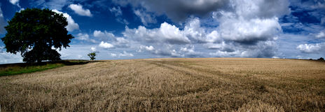 Farm Field Panoramic Royalty Free Stock Image
