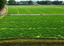Farm field Stock Photos