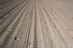 Farm field prepared for planting with footsteps. Dry farm crop field prepared for vegetable seedling planted with footsteps royalty free stock photo