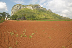 Farm field with red soil with limestone mountains in the Valle de Vi�ales, in central Cuba Stock Photos