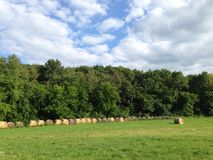 Farm Field With Rolled Hay Stock Photo