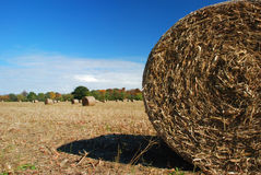 Farm Field, Round Hay Bales Stock Photo