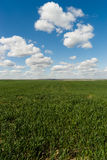 Farm Field Springtime Horizon Rural Countryside Fluffy Clouds Bl Stock Image