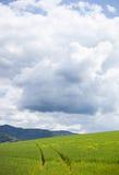Farm field with tracks Stock Photography