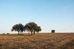 Farm Field. Trees on farm field. Alentejo, Portugal stock photography