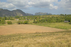 Farm field in the Valle de Vi�ales, in central Cuba Stock Image