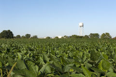 Farm field and water tower Royalty Free Stock Photo