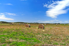 Farm Field In West Australia Stock Images