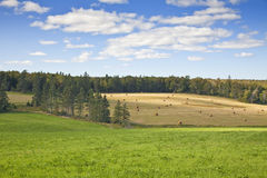 Farm Fields Royalty Free Stock Photo
