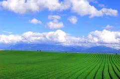 Farm fields. Blue sky, white cloud.Taken in switzerland Stock Photos