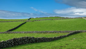 Farm fields hill in the Terceira island in Azores Stock Photography
