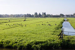 Farm fields in Holland Stock Photography
