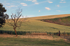 Farm Fields with a Leafless Tree. And Blue Sky stock image