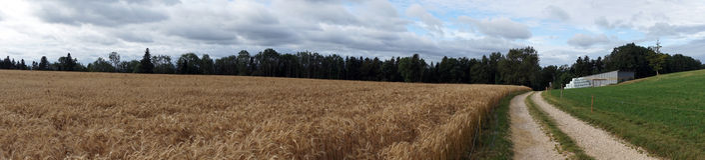 Farm fields royalty free stock photo