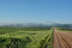 Farm Fields and Road. A gravel farm field road with distant fog Royalty Free Stock Images