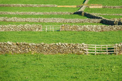 Farm fields with stone walls in the Terceira island in Azores Royalty Free Stock Photo