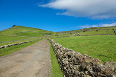 Farm fields in the Terceira island in Azores with road Royalty Free Stock Image