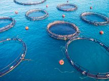 Free Farm Fish Salmon Aquaculture Blue Water Floating Cages. Aerial Top View Royalty Free Stock Photography - 151478917