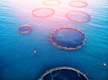 Free Farm Fish Salmon Aquaculture Blue Water Floating Cages. Aerial Top View Royalty Free Stock Photos - 161701978