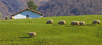 Farm and flock of sheep in the valley of Baztán Royalty Free Stock Photo