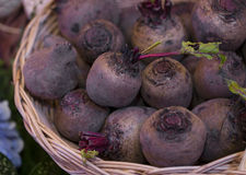 Farm Fresh Beets in a basket. Royalty Free Stock Photo