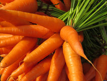 Farm Fresh Carrots. Background of fresh and luscious raw carrots fresh from a farm Stock Photos