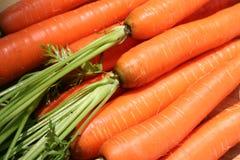 Farm Fresh Carrots. Macro image of farm fresh carrots with stalks Royalty Free Stock Image