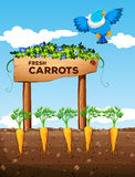 Farm with fresh carrots and sign Stock Photo