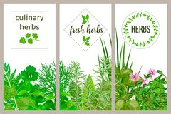 Farm fresh cooking herbs. Set of culinary cards. Greenery, basil, vector icon, Hydroponik royalty free illustration