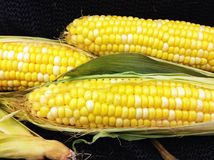 Farm fresh corn on the cob. From the farmers market Stock Photo