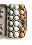 Farm fresh eggs. Carton of white, green, and brown eggs with missing egg Royalty Free Stock Photography
