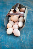 Farm fresh eggs. Chicken eggs collected in an antique grain scoop Stock Photo