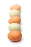 Farm Fresh Eggs Stock Images