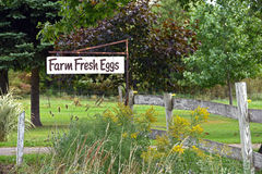 Farm fresh eggs for sale sign Royalty Free Stock Image