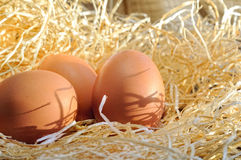 Farm fresh eggs on straw close up Stock Photography