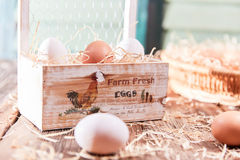Farm fresh eggs in sunlight Stock Images