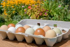Farm fresh eggs in a variety of natural earth tone colors. Closeup of carton of fresh eggs in a variety of beautiful natural earth tone colors stock photo