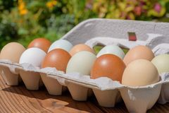 Farm fresh eggs in a variety of natural earth tone colors. Closeup of fresh eggs in a variety of beautiful natural earth tone colors royalty free stock images