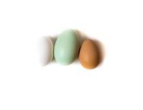 Farm fresh eggs. White, brown and green eggs Stock Image