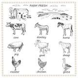 Farm fresh royalty free illustration