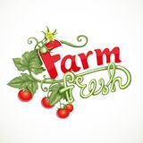 Farm fresh lettering with tomato sprout with flower Stock Photography
