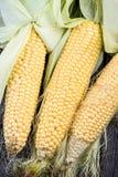 Farm fresh organic corn cob Stock Photo