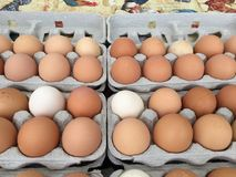 Farm fresh organic eggs. Brown, white, tan and speckled stock photo
